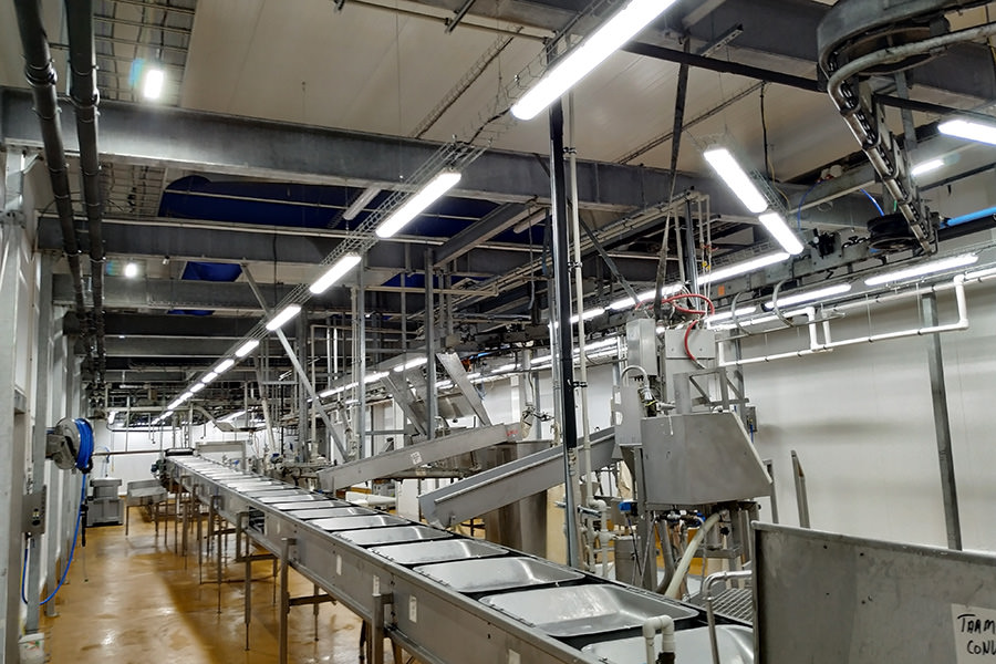 buy ledz LED lights for cutting line pork carcasses, fixtures for meat processing plants